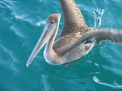 The Most Beautiful Place on Earth: The Galapagos Islands