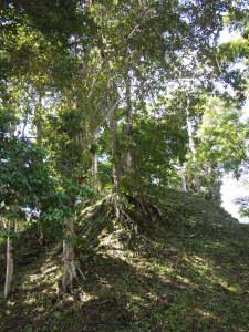 Hidden Ruin at Complex Q, Tikal