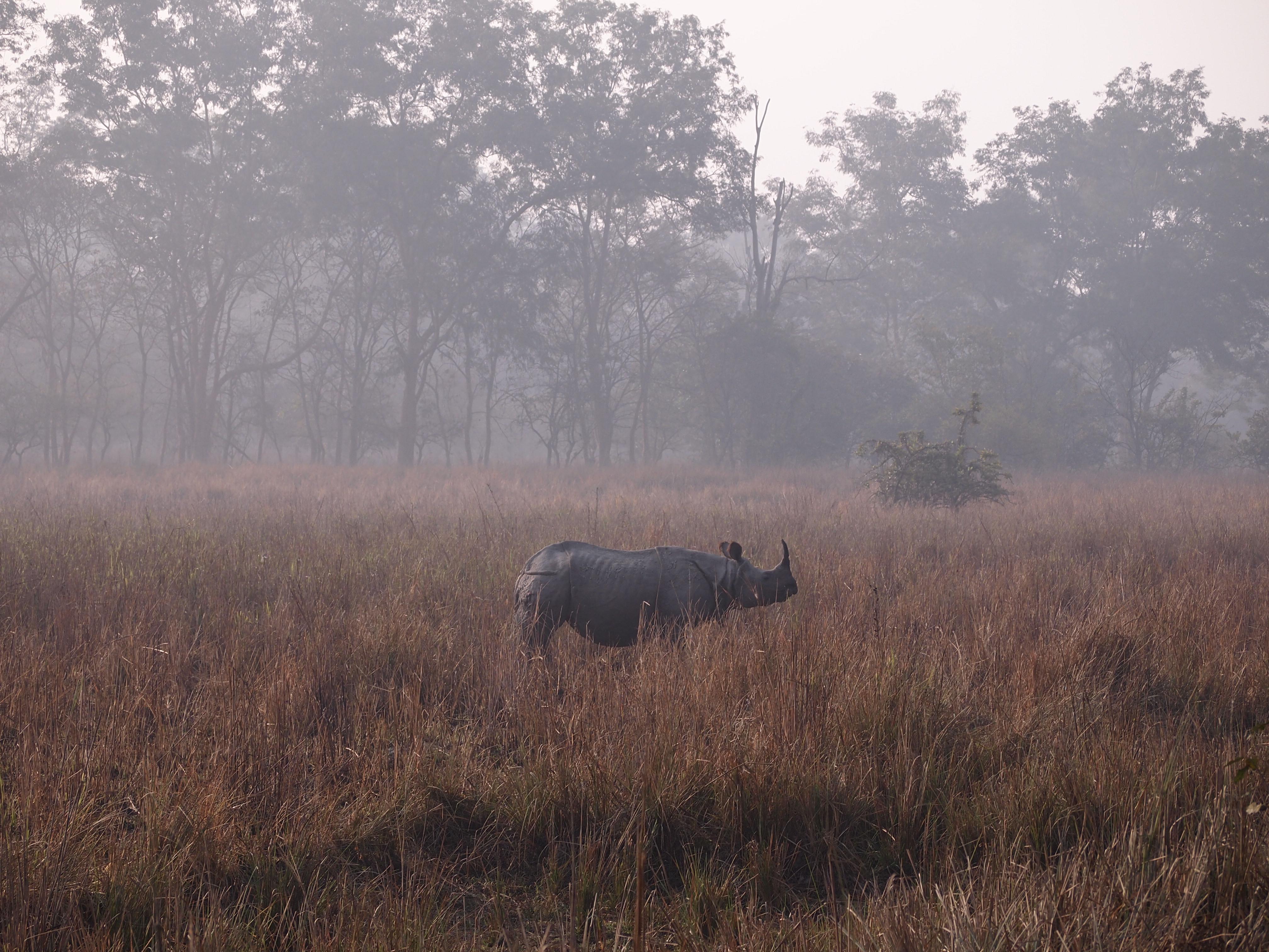Pobitora Wildlife Sanctuary Assam Essential Travel Guide