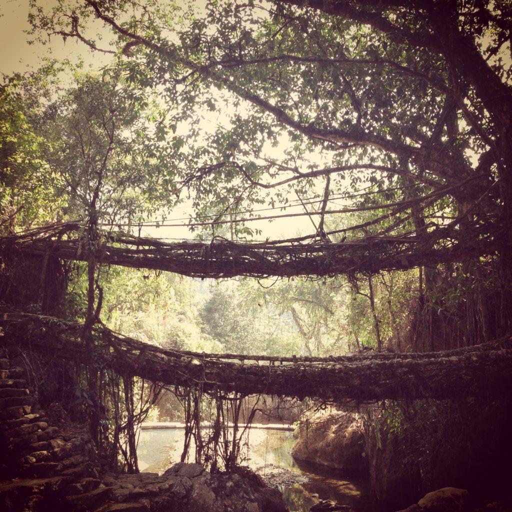 The double decker root bridge