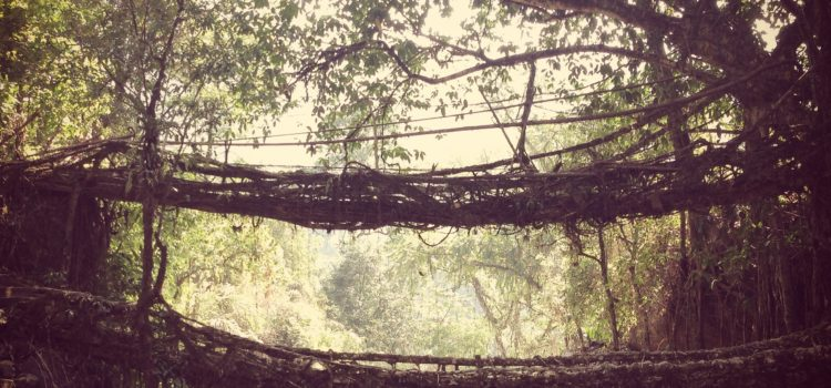 Meghalaya: Root bridges and climacophobia