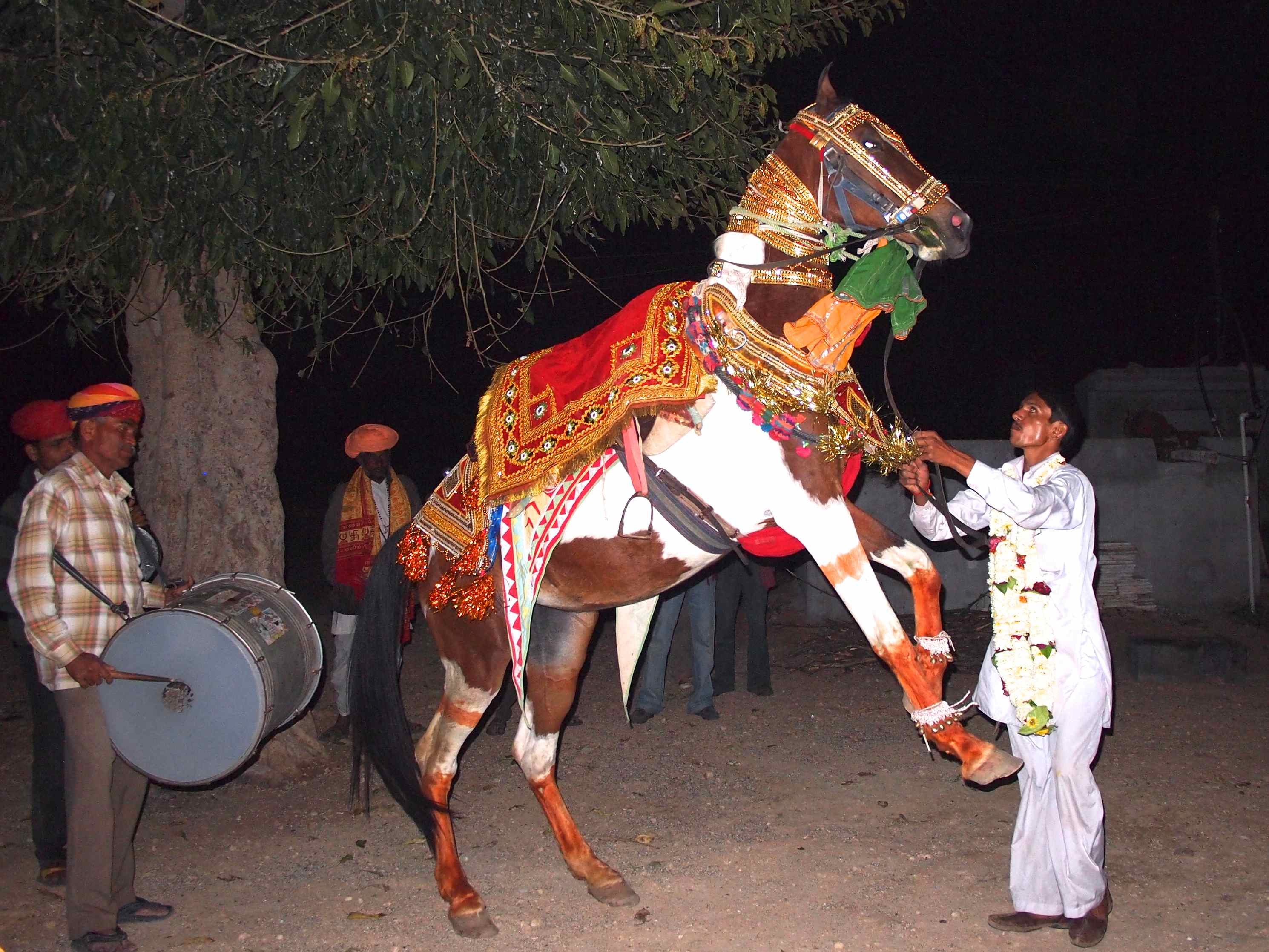Dancing Wedding Horse