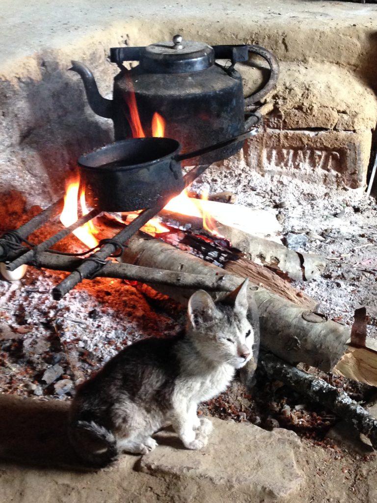 Nagaland homestay kitten